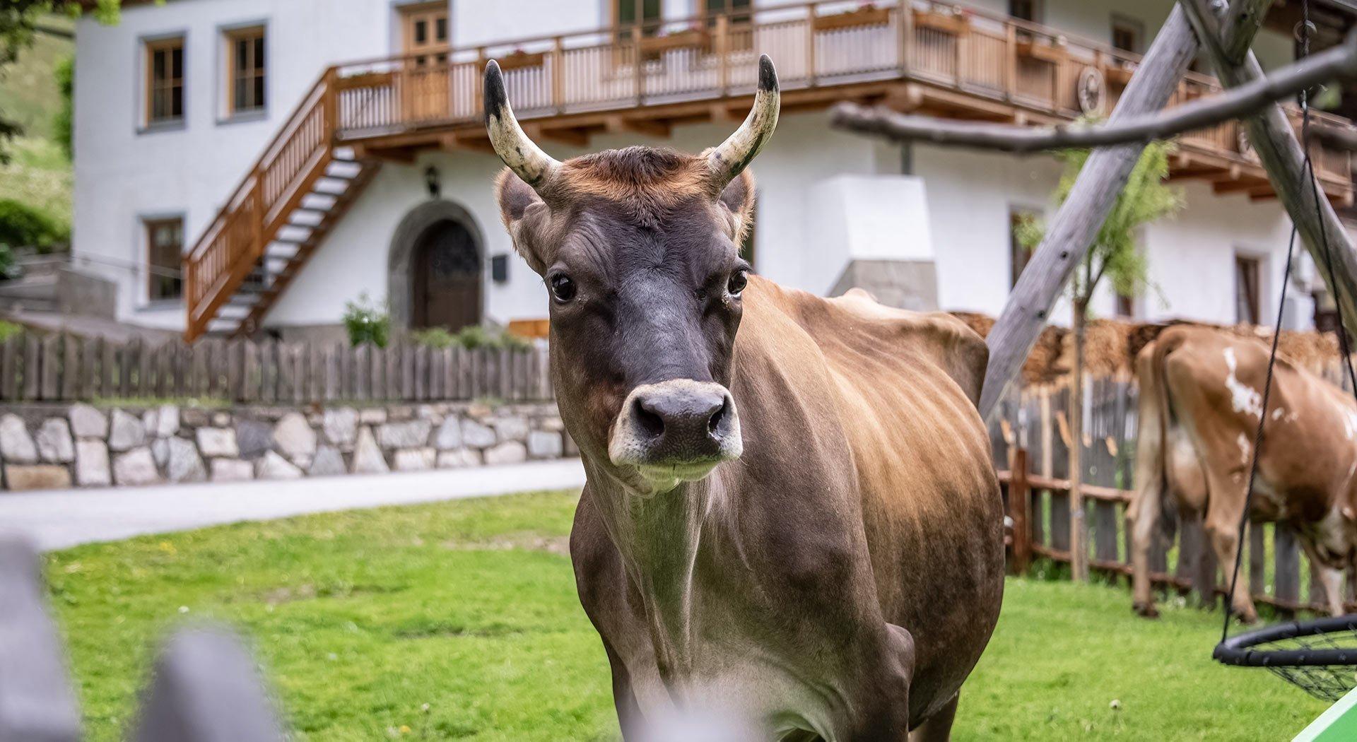Der Blasighof – Ihr Urlaub auf dem Bauernhof im Pfitschertal